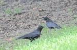 Wildlifewatcher's Blog (14)